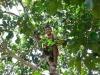 木にスルスル登る男の子